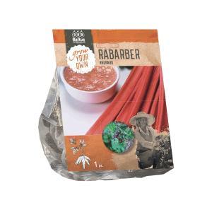 Baltus Rhubarb Rabarber bloembol per 1