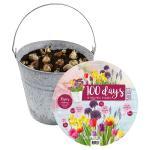 Baltus Giftbox Bucket Flower Emmer met bloembollen per 25 stuks