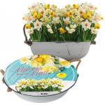 Baltus Giftbox Narcissus Mini Mix in Teil bloembollen per 12 stuks