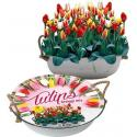 Baltus Giftbox Tulpen Greigii Mix in Teil bloembollen per 12 stuks