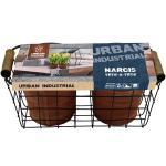Baltus Giftbox Urban Industrial Basket Flower Bulbs bloembollen per 2 stuks