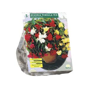 Baltus Begonia Pendula Mix bloembollen per 5
