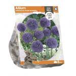 Baltus Allium Aflatunese Purple Sensation bloembollen per 5 stuks