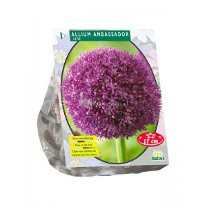 Baltus Allium Ambassador bloembol per 1 stuks