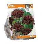 Baltus Allium Atropurpureum bloembollen per 3 stuks