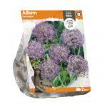 Baltus Allium Christophii bloembollen per 2 stuks