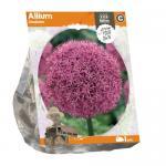 Baltus Allium Gladiator bloembollen per 1 stuks