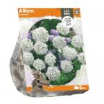 Baltus Allium Graceful bloembollen per 5 stuks