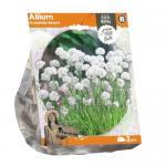 Baltus Allium Gracefully Beauty bloembollen per 3 stuks