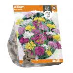 Baltus Allium Mini Mixed bloembollen per 25 stuks