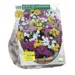 Baltus Allium Mix bloembollen per 100 stuks