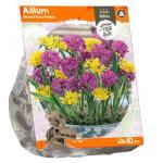 Baltus Allium Mixed Pink Yellow bloembollen per 10 stuks