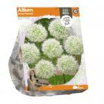 Baltus Allium Mount Everest bloembollen per 1 stuks