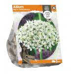 Baltus Allium Nigrum Multibulbosum bloembollen per 3 stuks