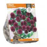 Baltus Allium Sphaerocephalon bloembollen 20 stuks