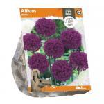 Baltus Allium Stratos bloembollen per 1 stuks