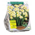 Baltus Narcissus Mini Mix bloembollen per 40 stuks