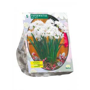 Baltus Narcissus Paperwhite Ziva narcissen bloembollen per 5 stuks