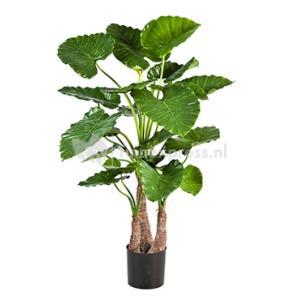 Kunstplant Alocasia calidora L