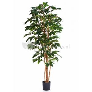 Kunstplant Coffea arabica XL