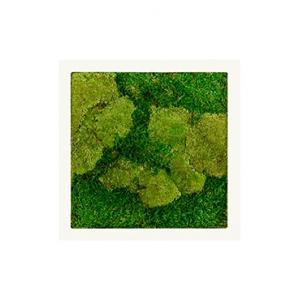 Moswand schilderij metaal stiel vierkant wit mat 50A