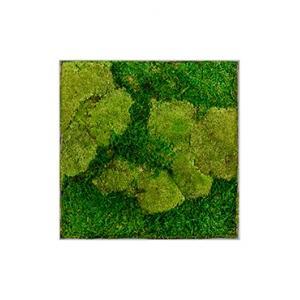 Moswand schilderij metaal superline L vierkant 50A
