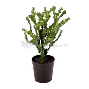 Kunstplant Mountain cactus XL