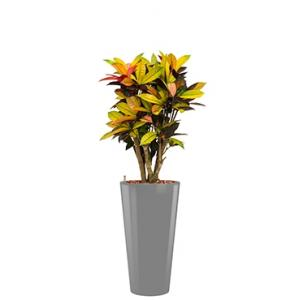 Standard All in 1 Hydrocultuur Croton iceton rond zilver