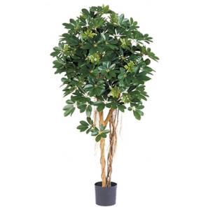 Kunstplant Schefflera arboricola M