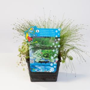 Mix zuurstofplanten in vijvermand