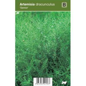 "Franse dragon (artemisia dracunculus ""Senior"") kruiden"