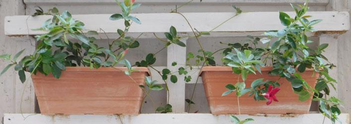 Tuinonderhoud - Verticaal tuinieren