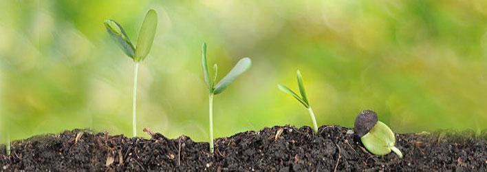 Tuinplanten - Zaden