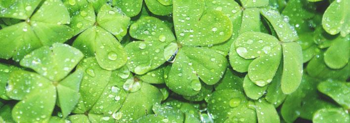 Tuinplanten - Vijverplanten - Zuurstofplanten