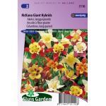 Akelei langgespoorde bloemzaden - McKana Giant Hybrids