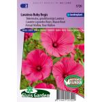 Bekermalva bloemzaden – Lavatera Ruby Regis