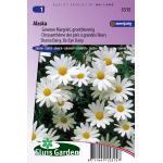 Gewone Margriet grootbloemig bloemzaden - Alaska