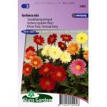 Grootbloemig mengsel bloemzaden - Gerbera Mix