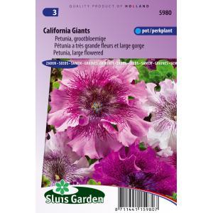 Grootbloemige petunia bloemzaden – California Giants