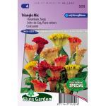 Hanenkam hoog bloemzaden - Triangle Mix