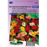 Hoge dubbelbloemige klimkers bloemzaden – Oost-Indische kers Gleam hybride mix