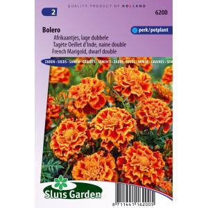 Lage dubbele Afrikaantjes bloemzaden – Bolero