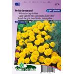 Lage dubbele Afrikaantjes bloemzaden – Petite citroengeel