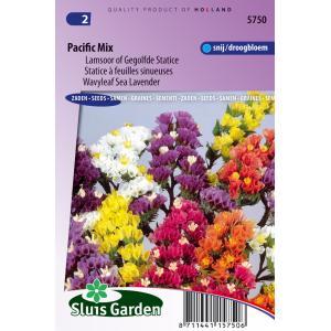 Lamsoor bloemzaden – Pacific mix