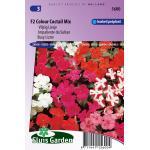 Vlijtig Liesje bloemzaden - F2 Colour Coctail Mix